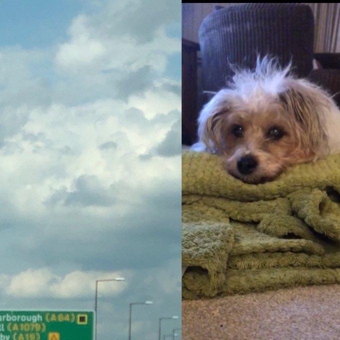 Frau verlor geliebten Hund in den Armen ihres Vaters: sie tröstete sich, nachdem sie Wolken sah, die dem Gesicht ihres Hundes glichen