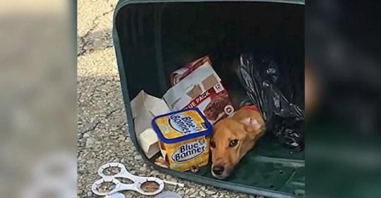 Frau 'entsorgt' Hund in Mülleimer, um zu ihrem Freund in einen andere Staat zu ziehen