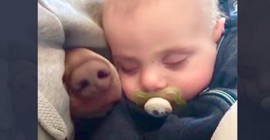 Mama filmt schlafendes Baby - daneben taucht eine pelzige Nase auf