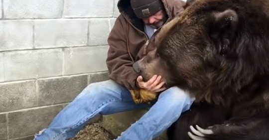 Ein Bär bekommt eine Umarmung von einem Menschen, die er nach einem langen Tag brauchte