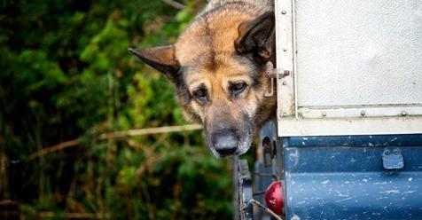 Besitzer trifft keine Schuld Hund stirbt im Kofferraum – weil Unbekannte ihn geschlossen hatten!