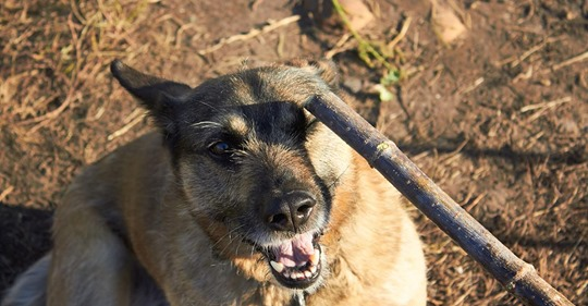 FOCUS Online Dogcast  Was soll das? Hunde Expertin kritisiert Brutalo Erziehungsmethoden bei Welpen