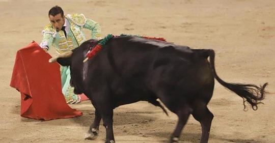 Spanische Stierkämpfe wieder gestartet: Stier stirbt elendig mit Schwert im Rücken