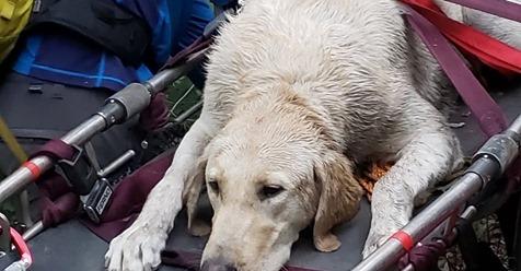 Bei extremer Hitze Retter tragen kollabierten Hund sechs Stunden durch die Berge