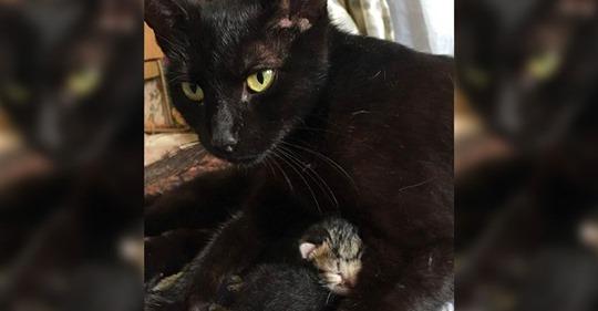 Tierisches Happy End Schwangere Straßenkatze bittet um Hilfe – und findet Zuhause für immer