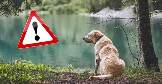 Gefährlich für Mensch und Tier Tödlicher Ausflug: Hunde sterben wegen Blaualgen im Badesee