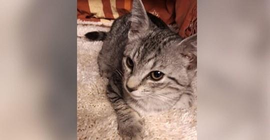 Unfassbare Tat Unbekannter wirft Katzenbaby bei voller Fahrt aus Autofenster