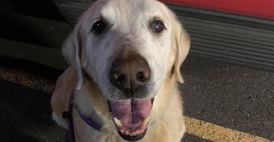 Polizei bittet um Hilfe Frau setzt alten Hund auf verlassenem Parkplatz aus – und fährt weg!