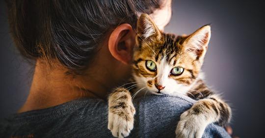 Lebensgefahr Diese 10 Dinge haben in der Nähe deiner Katze nichts zu suchen