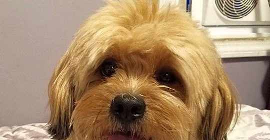 Unfall mit Fahrerflucht Spenden für Amputation: Fremde retten verletztem Hund das Leben
