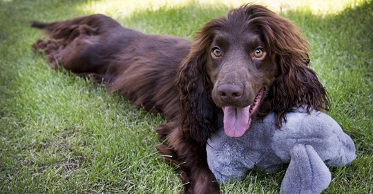 Rücksichtslos weggeworfen: Hund muss wegen Einwegmaske um sein Leben kämpfen