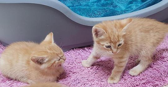 Katzenbabys hätten sterben müssen: Tierheim richtet dringenden Appell an Katzenbesitzer