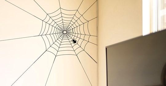 Spinnenfänger & Co.: So vertreiben Sie Spinnen aus dem Haus