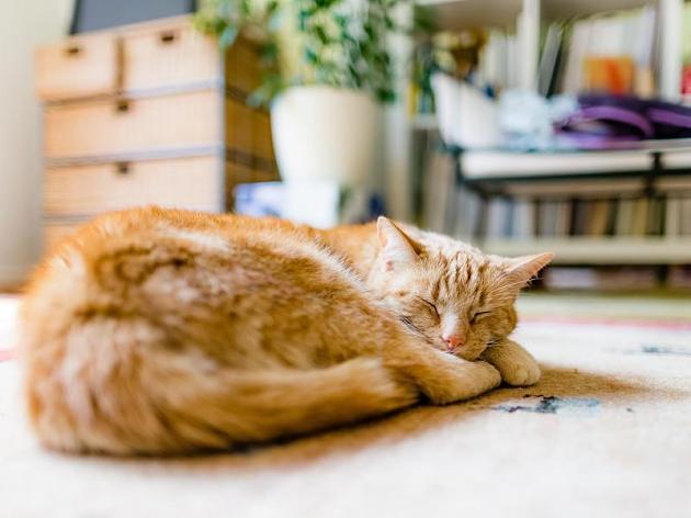 Furchtbare Tierquälerei in Remlingen! Katzen brutal aufgeschlitzt