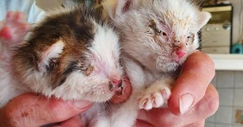 Tierquälerei in Brücken: Fünf Katzenbabys in verschnürter Plastiktüte ausgesetzt