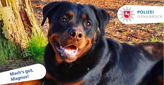 Er versteckte sich Hund wird aus Polizeidienst entlassen – weil er zu lieb ist