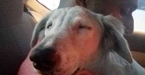 Er schlief sofort auf meinem Arm ein  Mann rettet Straßenhund – und findet Freund fürs Leben