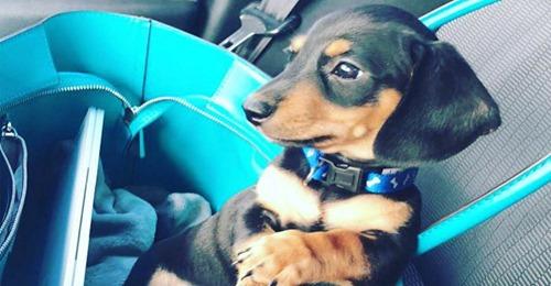 Fatale Verwechslung Tierklinik verwechselt Besitzer und schläfert Hund ein