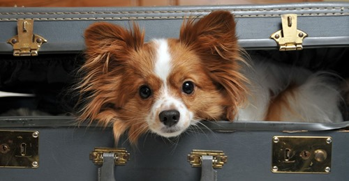Im Koffer versteckt Damit seine sterbende Frau Abschied nehmen kann: Mann schmuggelt Hund ins Krankenhaus