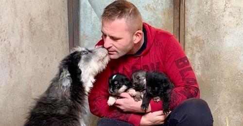 Tierische Rettungsaktion Straßenhündin holt Hilfe, damit ihre Welpen nicht erfrieren