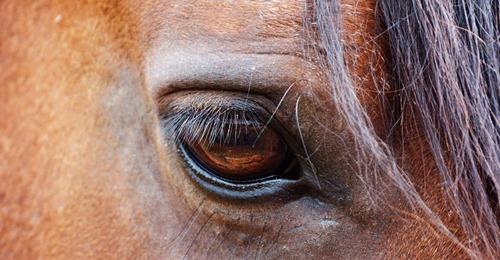 Sie kämpfte mit dem Tod Stute droht zu sterben – bis anderes Pferd ihr wieder auf die Beine hilft