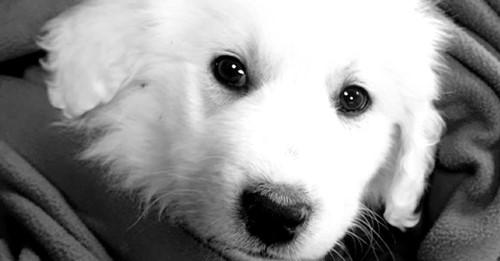Auf Online-Portal entdecktWelpe stirbt zwei Tage nach Kauf - Tierheimleiter warnt vor dubiosen Angeboten