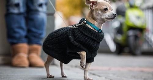 EschwegeMann überfährt Chihuahua   Hundebesitzer prügelt ihn ins Krankenhaus