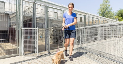 Leere Käfige Tierheim ist das erste Mal komplett leer – doch das schürt Angst