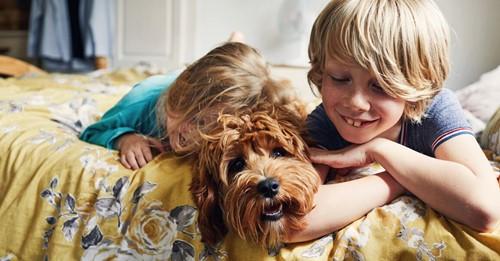 Neuer Hund zieht ein? Hundetrainierin erklärt, wie er sich an Familie und Haus gewöhnt