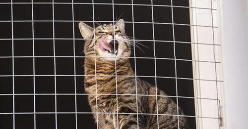In letzter SekundeAus verschmutzten Häusern in Bangkok: Tierschutzorganisation rettet über 300 Katzen
