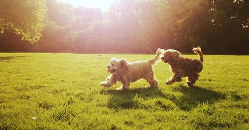 FOCUS Online DogcastJunger Welpe trifft auf alten Rüden: Hundeprofi gibt Tipps, wie das klappt