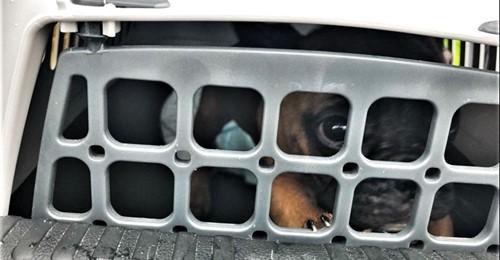 DURCH ZUFALL ENTDECKT Polizei rettet Hunde und Katzen aus Kofferraum