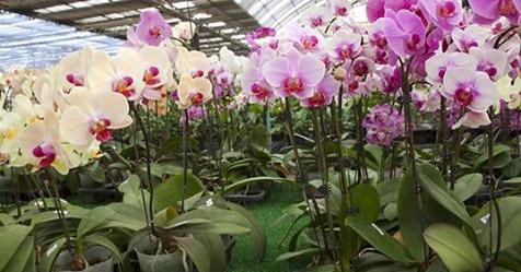 Orchideen kaufen: Mit diesen Tipps finden Sie die besten Exemplare