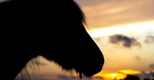 SchrecklichGift-Anschlag auf Pferde: Zwei Tiere sterben in NRW - Polizei ermittelt