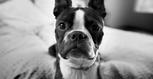Herzzerreißendes Video Hund wird vermeintlich auf Diät gesetzt – und seine Reaktion spricht Bände