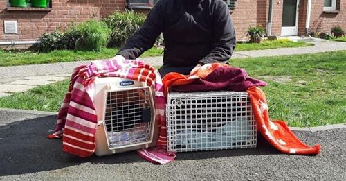 Lebenslänglich hinter Gitter Katzen im Knast: Gero und Luzie ziehen vom Tierheim in die JVA