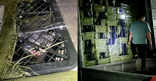 160 Tiere entdecktGrausamer Trend in China: Überraschungsboxen mit lebendigen Tieren per Post verschickt