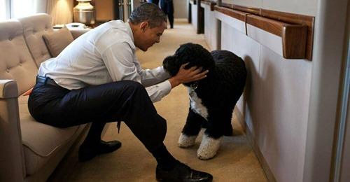 Michelle & Barack Obama  Unser bester Freund : Familienhund Bo ist an Krebs gestorben