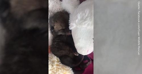 Süße Verwechslung Tierheim nimmt Babykatze auf – doch die ist gar keine Katze