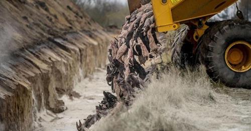 Dänemark beginnt mit Exhumierung von Nerz Kadavern