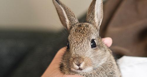 """Keiner wollte es Baby-Kaninchen wird im Tierheim abgeladen – weil es zu """"anhänglich war"""""""