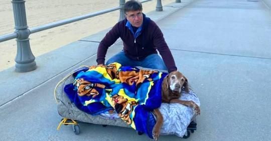 Er trägt älteren, kranken Hund auf einer Liege zum letzten Spaziergang an der frischen Luft