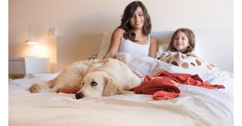Mit Hund im Bett: Kuscheln auf eigene Gefahr