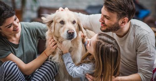 FOCUS-Online-DogcastHaustiere keine Familienmitglieder? Warum Psychologen-Aussage völlig falsch ist