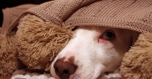 Er hoffte, dass sie wiederkommen Hund wird ausgesetzt und klammert sich an seine Schmusedecke