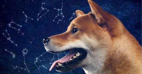 Bester Freund Welcher Hund passt zu deinem Sternzeichen