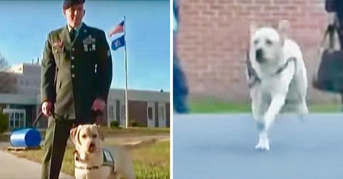 Mann besucht Gefängnis mit seinem Diensthund - aber der Hund sprintet auf einen Häftling zu