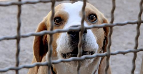 Aufnahme abgelehnt: Verzweifelte Frau wirft Hund über Tierheim-Zaun