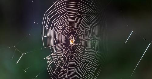 In ChinaFrau klagt über Hörprobleme - Ärztin entdeckt lebende Spinne in ihrem Ohr